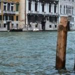 Oak Venice herkomst